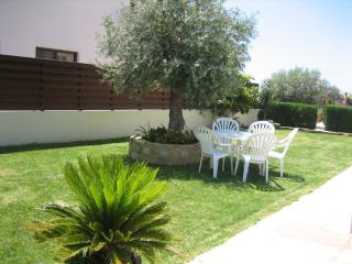 Large Green Garden with olive tree