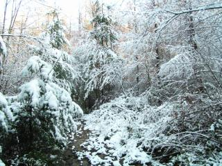 The Enchanted forest in winter