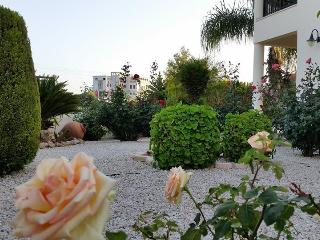 Garden with all color of roses